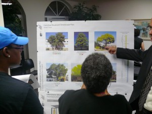A pictorial board shows the variety of trees being considered for the Crenshaw District. Photo by Brian W. Carter
