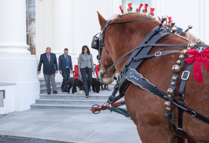 First Lady Michelle Obama welcomed the Official White House Christmas Tree with Bo and Sunny in tow. | Photo by Cheriss May, Howard University News Service