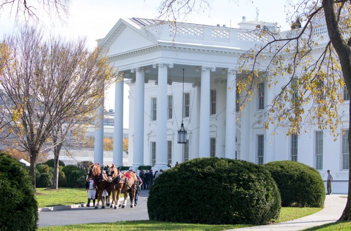 Karry and Ben, Belgian Draft Horses, leave after delivering the official White House Christmas tree. | Photo by Cheriss May, Howard University News Service
