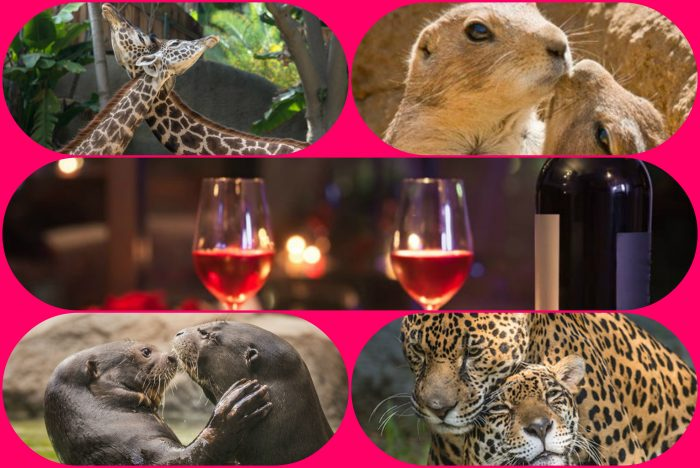 la-zoo-love-collage